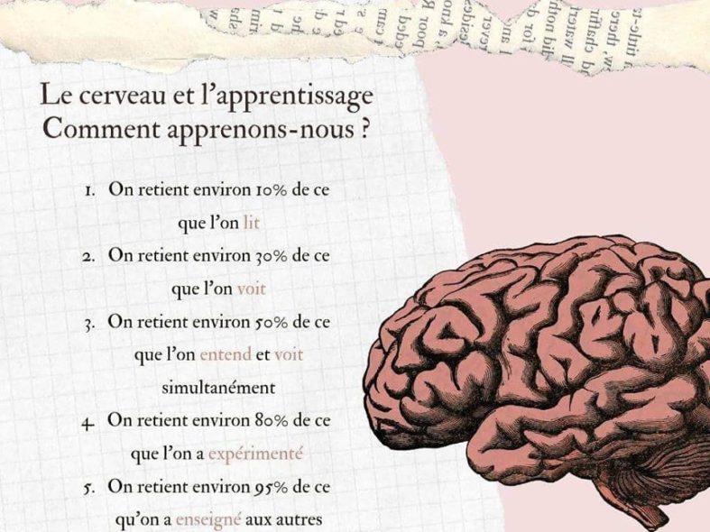 cerveau apprentissages